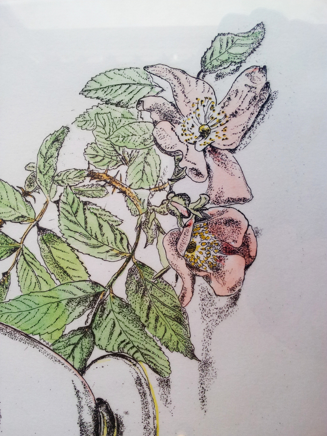 Framed Etching And Watercolour Roses June By Gillian